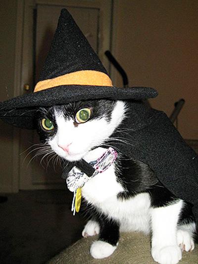 DIY 萬聖節寵物大變裝 - 巫婆貓