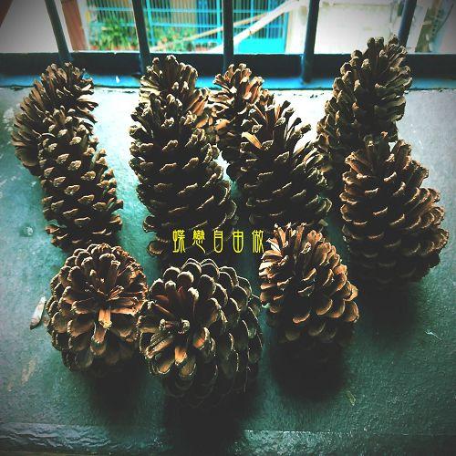 DIY 聖誕節手作松果聖誕樹 (1)